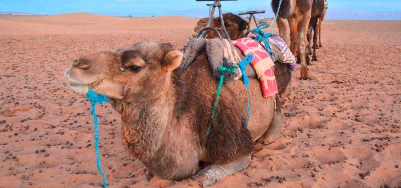 desierto de zagora desde marrakech