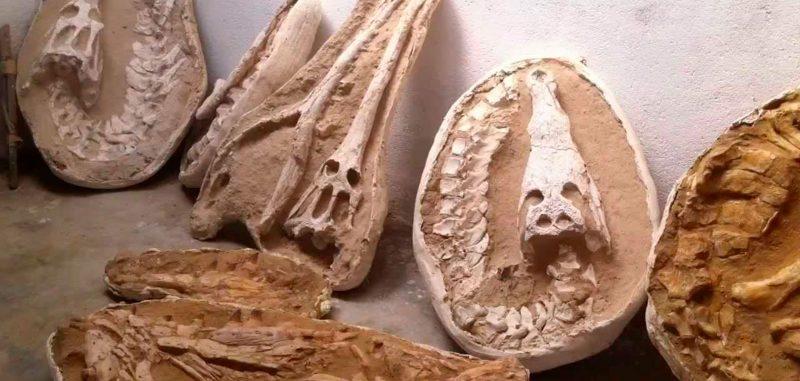 fossils minerals